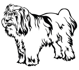 Decorative standing portrait of Tibetan Terrier vector illustration