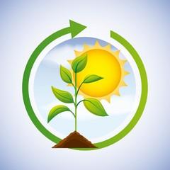 energy clean solar sun plant renewable vector illustration