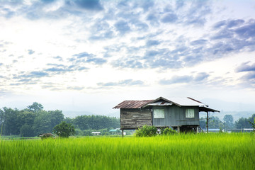 Green rice field with straw hut home-stay in Pua  Nan Province   Thailand.