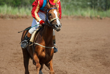 Race horse in run.