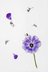 Beautiful Spring Flower Concept Photos