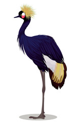 Black crowned crane cartoon