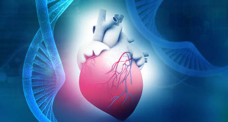 Human heart anatomy with dna abstract background. 3d illustration.