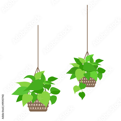 観葉植物のイラストfotoliacom の ストック画像とロイヤリティフリー