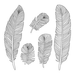 Hand drawn feathers outline silhouettes