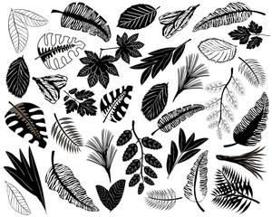 Black icons of tropical leaves. Set of tropical leaves in flat style. Black silhouettes of leaf isolated on a white background. Vector illustration.