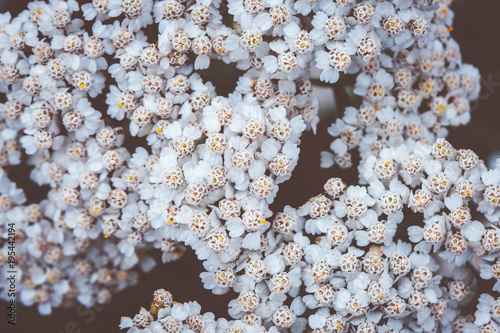 White meadow flowers background nature background stock photo and white meadow flowers background nature background mightylinksfo