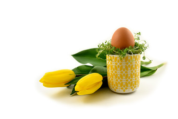 Yellow tulips with Easter egg stock images. Easter decoration on a white background. Spring decoration images. Easter decoration with cress