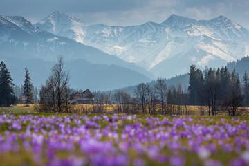 Obraz Spring in Tatra Mountains - fototapety do salonu