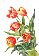 Watercolor bouquet of red tulips. Vintage illustration