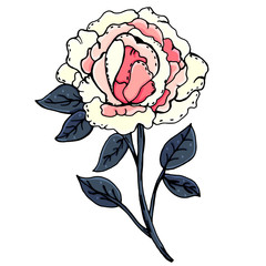 Peonies. Beautiful flowers. Manual drawing. Spring. A set of plants. For postcards, covers.