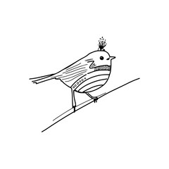 Bird hand drawn illustration for your design