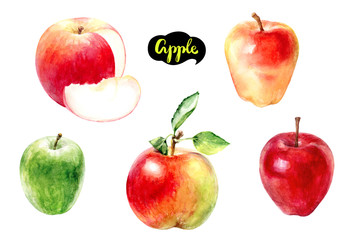 apple fruit watercolor