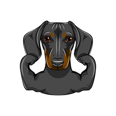 Portrait of Dachshund Dog with muscules. Vector illustration.