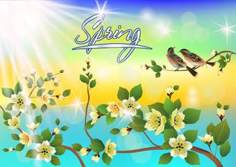 Vector illustration spring. All wakes up, flowers sakura blossom.Postcard