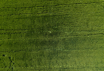 rice field aerial shot, agricultural landscape in asia.