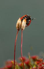 Beetle wave leg from moss seta
