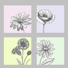 Set of wild, black and white field flowers - poppy, chamomile, cornflower, daisy, sketch vector illustration