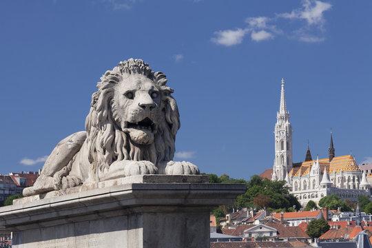Lion statue on Chain Bridge, Matthias Church on Castle Hill, Budapest, Hungary