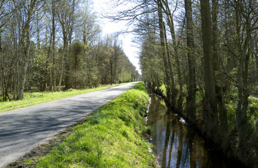 Laesoe / Denmark: Ditch along a small country road in Bangsbo in springtime