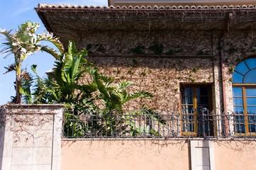 House fills of climbing plants