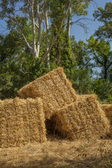Bundles of hay  in an agriculture farm. Field background. Summer time.