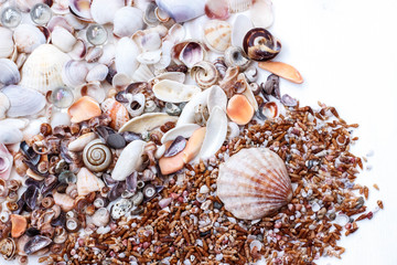 background of white and brown sea seashells