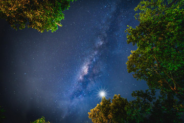 Wall Mural - Landscape with Milky way galaxy. Night sky with stars and silhouette trees. Long exposure photograph.