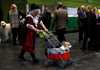 A woman in fancy dress pushes a Welsh Corgi in a trolley during the first day of the Crufts Dog Show in Birmingham