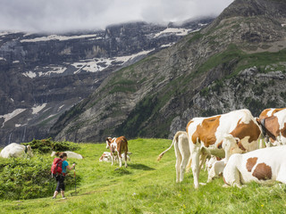 Woman hiking by cows in the High Pyrenees on a single trail with view over Cirque de Gavarnie, France