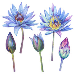 Set with flowers blue Egyptian lotus (water lily, Nymphaea caerulea, sacred lotus). Watercolor hand drawn painting illustration isolated on white background. For greeting cards, textile design