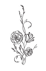 Hand drawn Wild rose flowers vector drawing and sketch with line-art on white backgrounds