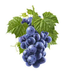 Bunch of fresh blue grapes isolated on white background