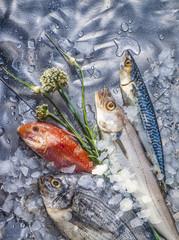 Arrangement mit 4 verschiedenen Edelfischen und frischen Kräutern