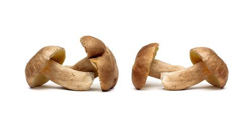 wild mushrooms on a white background