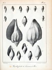 Fossil shells.