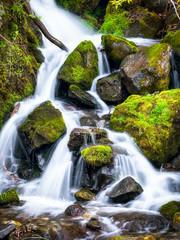 Frische Quelle entspringt im Wald