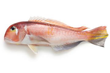 amadai, japanese tilefish