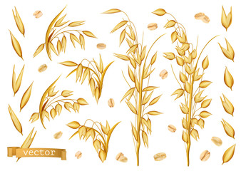 Oat plants, Rolled oats. 3d realistic vector icon set