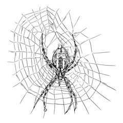 Vector artistic pen and ink hand drawing illustration of wasp spider on net.