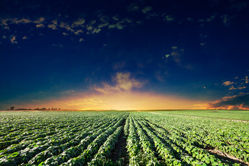 Green Field and Beautiful Sunset Wall mural