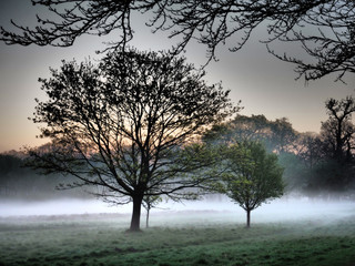 Bare trees covered with morning mist in Windsor Great Park.
