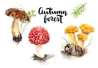 Forest mushroom watercolor.
