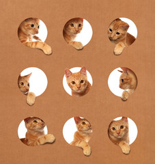 Cute little orange tabby kittens playing in a cardboard box