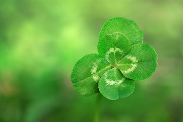 Five leaf lucky clover background