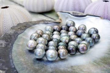 Tahitian Black Pearls in a Black lip oyster shell