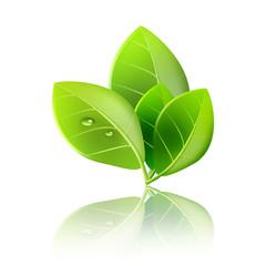 エコロジー 自然環境 エコ 低炭素社会 成長 リサイクル