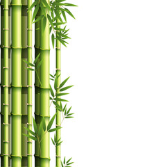 Background design with green bamboo