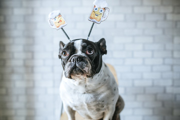 Dog with beer diadem