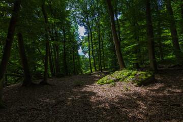 Mullertahl forest